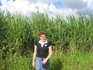 Zuckerrohrfeld bei Punta Cana