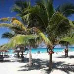 Palmenstrand in Varadero