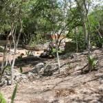über der Cenote