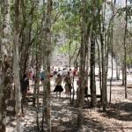 Fußmarsch im Wald zur Pyramide von Coba