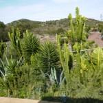 Vegetation auf Teneriffa