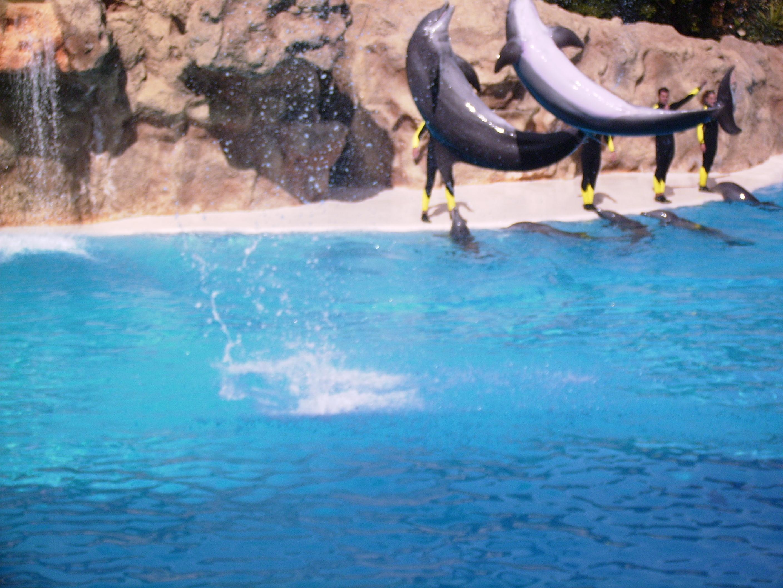 Delphin-Show im Loro Parque auf Teneriffa
