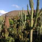 Großen Kakteen im Kaktusgarten