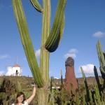 Höchster Kaktus im Kaktusgarten