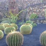 Kaktusexemplare im Kaktusgarten
