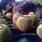 Ausstellung im Kaktusgarten auf Lanzarote