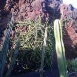 Kaktus im Kaktusgarten