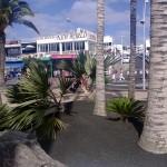 Grünanlagen in Puerto del Carmen