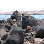 Felsen an der Nordküste von Aruba