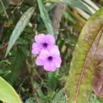 Blumen im Kontiki Beach Resort Curacao