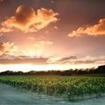Swan Valley - Westaustraliens ältestes Weinanbaugebiet