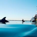 Schwimmen Sie mit Delphinen
