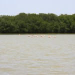 Bonaire - eine der weltweit letzten natürlichen Brutstätten für Flamingos