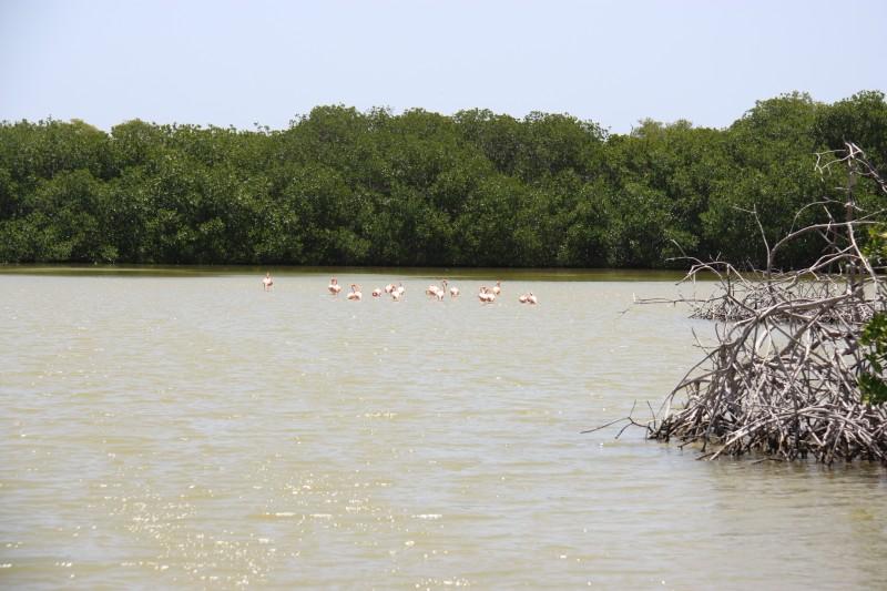 Flamingo-Familie in Süden von Bonaire