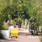Botanik im Plaza Resort Bonaire