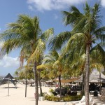 Palmenstrand im Plaza Resort Bonaire