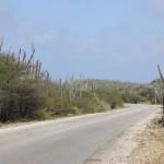 Kakteen am Straßenrand auf Bonaire