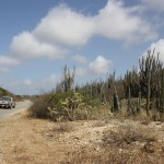 Straße durch den Kakteenwald auf Bonaire