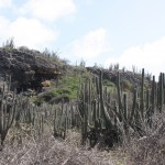 Kakteenlandschaft auf Bonaire