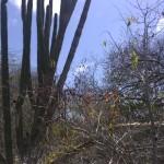 Kakteen-Fauna auf Bonaire