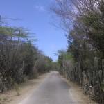 Kakteen säumen auf Bonaire die Straßen