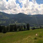 Mittag am Alpsee