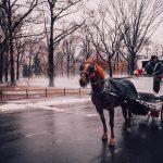Eine romantische Kutschfahrt im Central Park bietet sich im Februarwetter an
