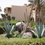 Botanik im Magic Life Kalawy Ägypten