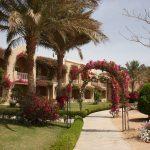 Blumen im Magic Life Kalawy Ägypten